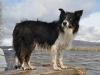 8-our-friend-called-skye